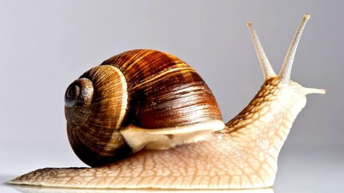 How to start snails farming business